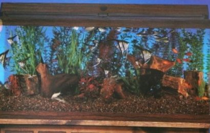 Aquarium plants are for fishes- Some factors to consider before plants are chosen-