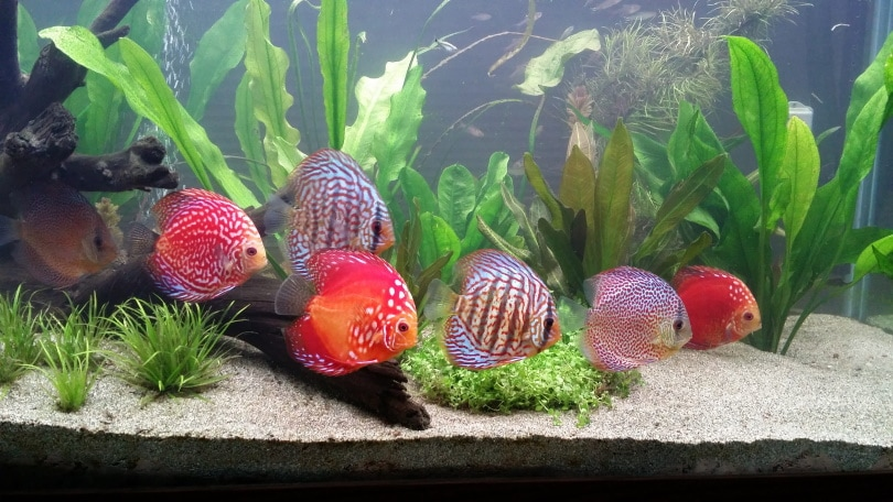 How to Purchase Fish over the Internet?